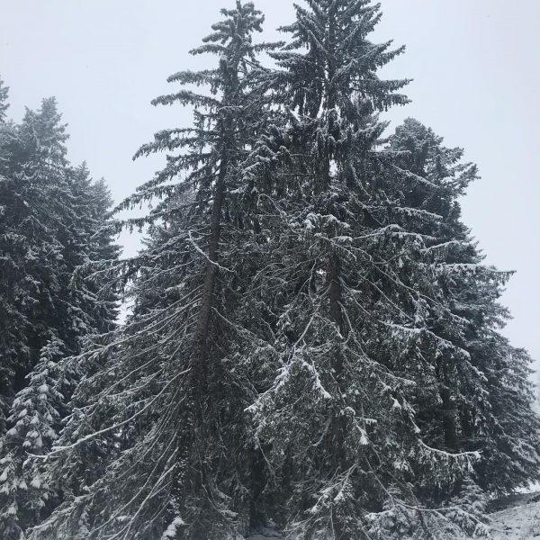 Der Schnee ist da! ❄️❄️❄️ Juhu 😍 Reduktion auf schwarz-weiß. Erholung für die Sinne #sibratsgfäll #bregenzerwald #visitvorarlberg...