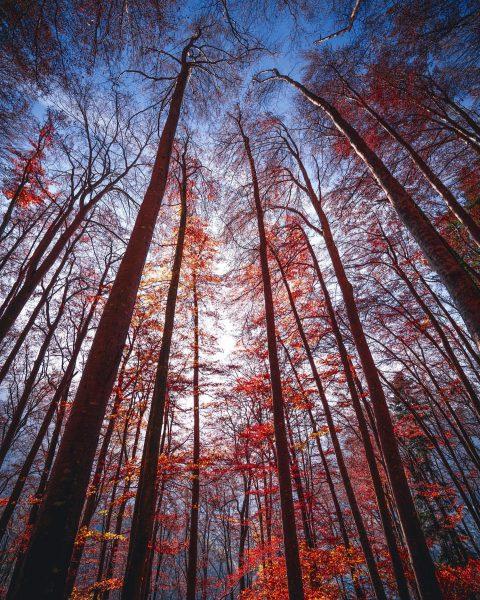 Autumn impression • • • • • @visitaustria @earth_deluxe @earth_shotz @allbeauty_addiction @folkgreen • ...