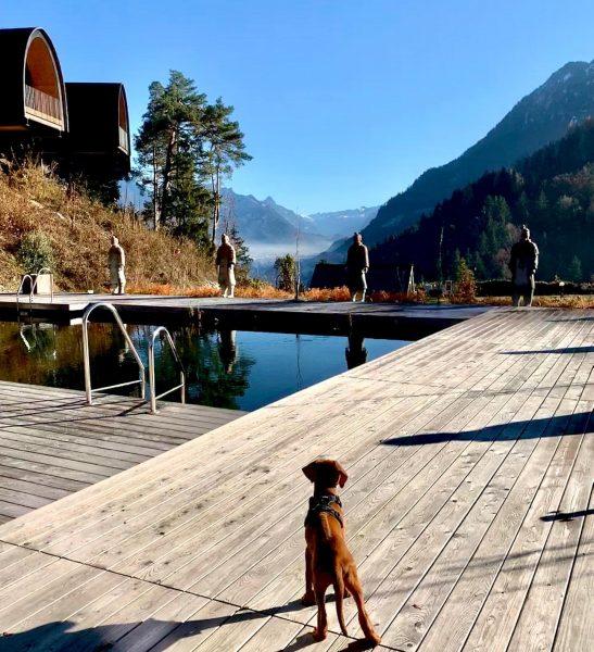 Hunde sind 💚-willkommen #happydog #ridgebackdaya #leadingcampings #dogswelcome #hundewillkommen #campingundhund #hundedusche #hundewanderpass #alpencampingnenzing #camping #glamping #naturgenießen Alpencamping Nenzing