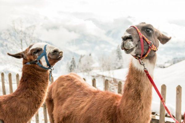 Ab sofort hast Du an jedem Adventsonntag die Chance, ein #bergeplus Abenteuer in ...