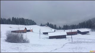 Neuschnee: So winterlich zeigt sich das Bödele