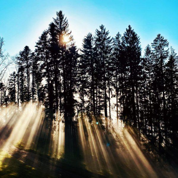 Sonnen-Minirock. ☀️ #nebel #vorarlberg #ländle #sonnenstrahlen #sunbeam #visitvorarlberg #nature #wandern #hikersofinstagram #mountains #mountainlove ...