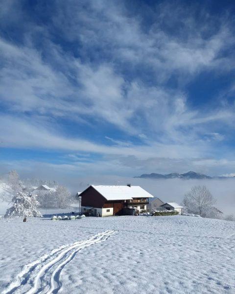 🐦.....und jetzt verzieht sich der Nebel langsam aber sicher....white snow, blue sky.... . ...