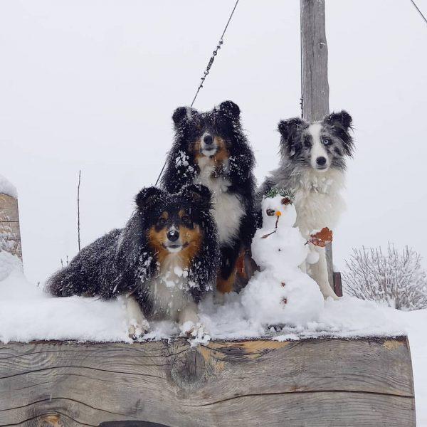 ~~~walking in a winterwonderland~~~ Am Wochenende waren wir das erste Mal rodeln mit ...