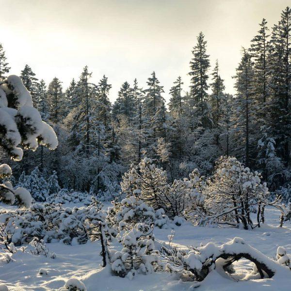 Winterwonderland #fohramoos #naturvielfaltvorarlberg #europaschutzgebiet #bödele #dornbirn #schwarzenberg Dornbirn