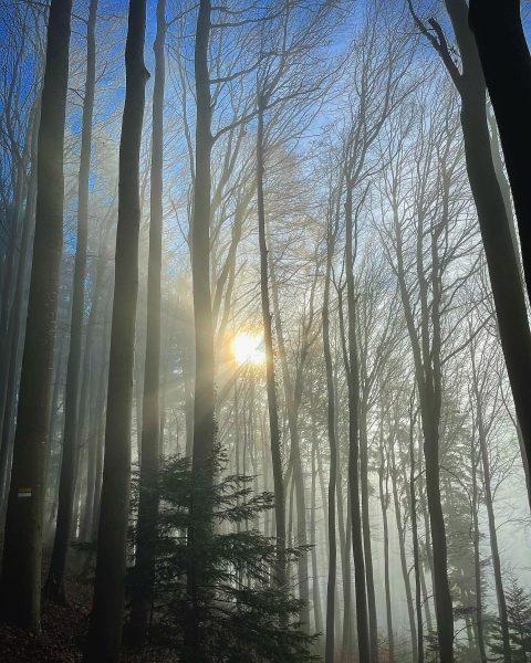 Above the fog ☀️ 🍁 📍 Kummenberg . . . . . #earthfocus ...