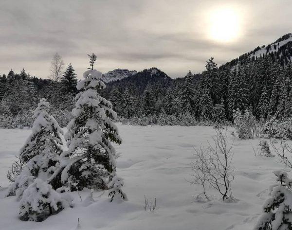 #sibratsgfäll #sibra #landscape #nature #snow #winter #winterwonderland #cloudy #cloudybutbeautiful #animaltracks #naturelover #outdoor #sobeautiful ...