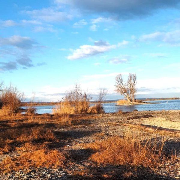 Rheinholz Heute 10:00 Uhr Vormittag - vom Winter weit und breit nichts zu ...