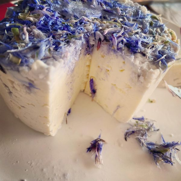 Yogini Nomads in the Alps: self made fresh cheese from raw cow milk with cornflowers from the...