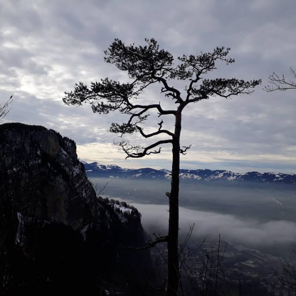 Blick vom winterlichen Karren ins Rheintal Richtung Oberland #baumimwinter #vorarlbergrheintal #vorarlberg #rheintal #dornbirn ...