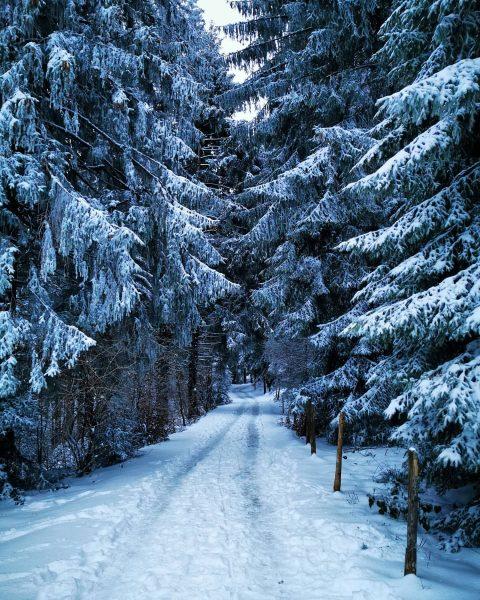 ❄️❄️ #snowwalk #winterwonderland 🌲🌨️ . . . #bregenzambodensee #bregenz #bregenzambodensee #bodensee #pfänderbregenz #pfänder ...