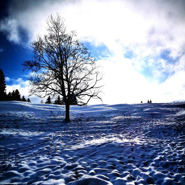 ❄️❄️☀️☀️ . . . . #pfänderbregenz #pfänder #walk #walking #healthy #healthylifestyle #lovewalking #clouds ...