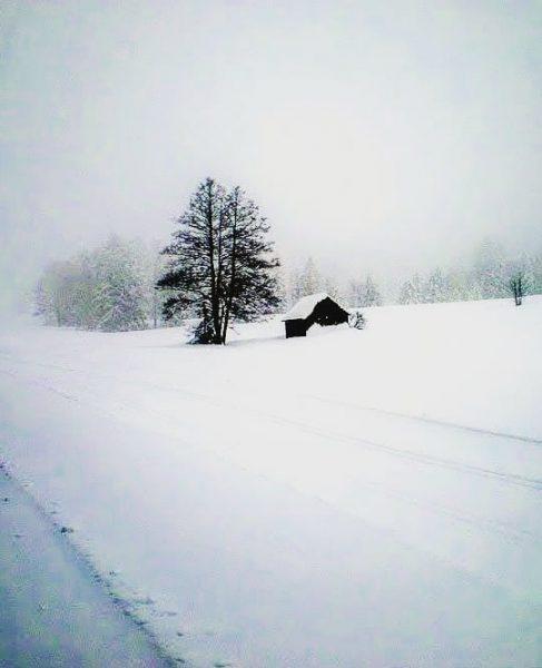 Winterwanderung im Bregenzer Wald #Baumsamstag #Sulzberg #Vorarlberg #Wintervergnuegen #winterzauber #schneelandschaft #Winterromantik Sulzberg, Vorarlberg, ...