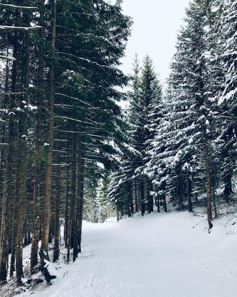 Wintertage mit Aussicht... Wer heute am Neujahrstag Lust auf eine Rodelpartie hat, dem kann ich das Dünser...