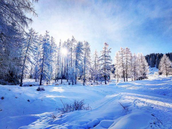 Winterwonderland Tschengla ❄️❄️❄️❄️❄️❄️❄️❄️❄️❄️❄️❄️❄️❄️❄️❄️❄️ #bürserberg #tschengla #vorarlberg #landscapephotography #winterwonderland #winterwandern #wanderlust #hikingadventures #hikingphotography #hiking ...
