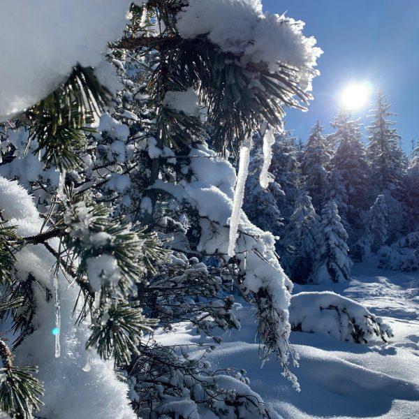 Sonne tanken in dieser traumhaften Winterkulisse am Bödele. ☀️😎❄️ #6850dornbirn #dornbirn #visitaustria #visitvorarlberg ...