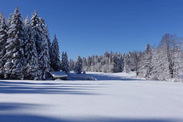 Winteridylle vor der Haustüre #winter #frozen #snow #natur #visitvorarlberg #visitbregenzerwald #visitus #staytuned #poldisulzberg ...