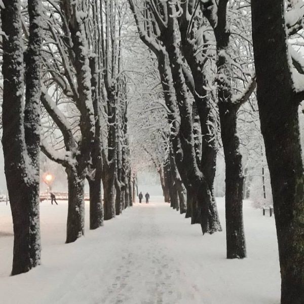 willst du mit mir geh'n? #willstdumitmirgehen#allee#kastanienbaum#winterwonderland#schnee#bezaubernd#stille#winter#handyfotografie#handyfoto#dämmerung#hobbyfotograf#hobbyfotografie#visitvorarlberg#ländle