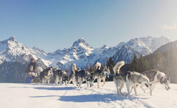 Träume jetzt. Reise später. Anmutig und stark. Die außergewöhnlichen Tiere begeistern. Umrahmt von ...