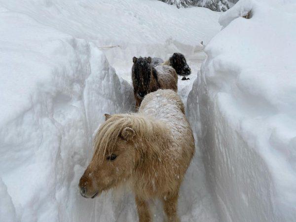 Da staunen selbst die Pferdchen wenn's mal so richtig schneit☺️😉 Winterliche Grüße vom ...