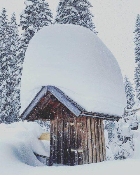 ❄FLOCKDOWN❄ . . #snow #snowlove #snowing #snowland #nosnownoshow #catwait2ski #paradise #snowedin #trappedin #eingeschneit ...