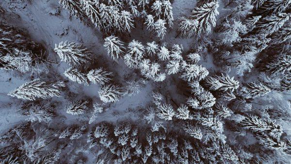 ❄️Vögel haben den schönsten Blick auf unseren #Bregenzerwald. So viel Neuschnee - was ...