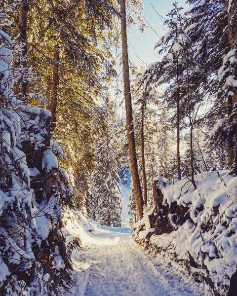 Der Winter kann eigentlich doch ganz schön sein ❄️😍 #winterwonderland #bödele #vorarlberg #lustenauerhütte #forest #alps #winterwalk #winterishere...