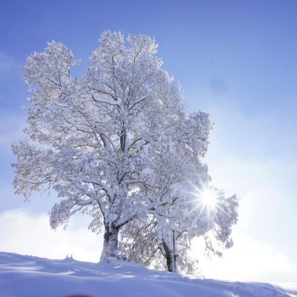 Wintertraum 💙 #kehlegg #fotografie #vorarlberg #dornbirn #kehlegglife #sonnenschein #bergwelten #eisbaum #traumhaft #wonderful_places #outdoordreams ...