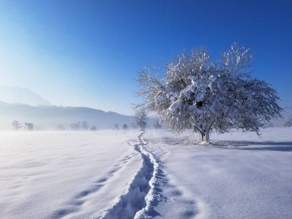 Frisch verschneite Landschaft, leichter Nebel, - 5°C... Traumtag im Ländle 🥰 #landschaftphotography #landschaft ...