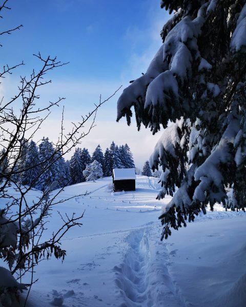 Today's #snowhike ❄️☀️😍 #winterwonderland . . . #bregenzambodensee #bregenz #bregenzambodensee #bodensee #pfänderbregenz #pfänder #view #snow #firtree #cottage...