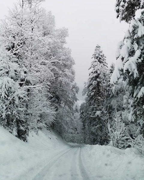 Winterzauber😍 #meinvorarlberg #vorarlberg #landscape #wald #Bregenzerwald #picoftheday #ländle #snow #photooftheday #austria #mountains #alpensucht ...