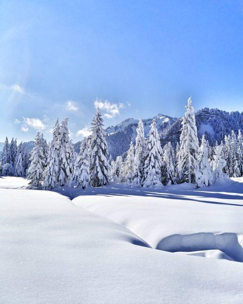 Ein Tag wie aus dem Bilderbuch. ❄️☀️ 📸 @visitbregenzerwald #winter #winterwonderland #schnee #snow ...