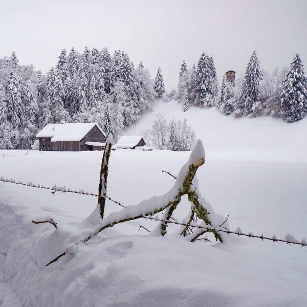 #winterwonderland #hittisau #visitbregenzerwald #visitvorarlberg #visitaustria #neuschnee #bolgenach #schnee #schneelandschaft #schneezauber #snow #snowlandscape #snowday ...