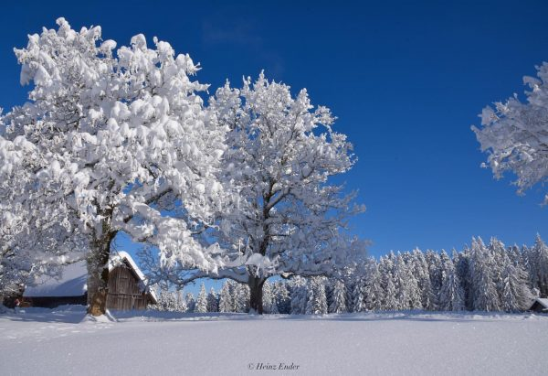 A wonderful winter day ❄️☃️ . . . #winter #winterwonderland #wintertime #winterwonderland❄️ #schönertag ...