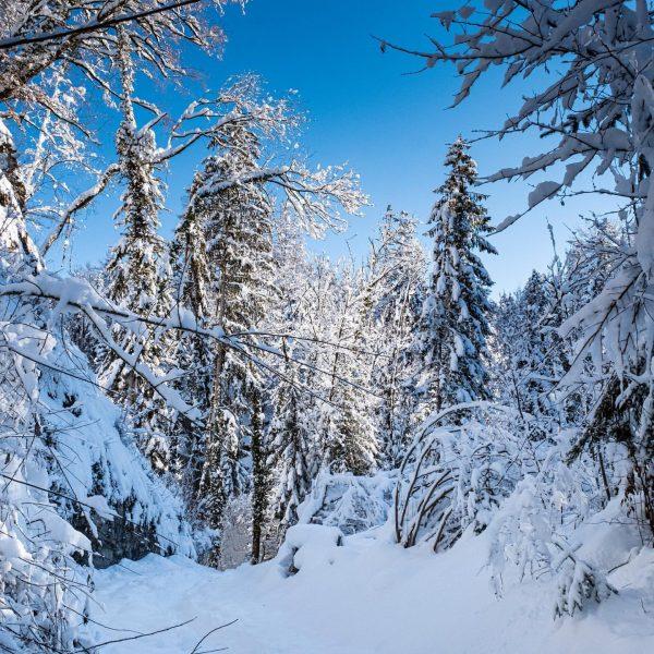 #winterwonderland , #winterlandschaft , #rankweil , #frutz