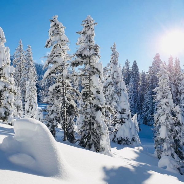 #skitour #skitouring #skitouren #winter #wonderland #laterns #snow #nice #light #silence #uphill #photooftheday #sunshine ...