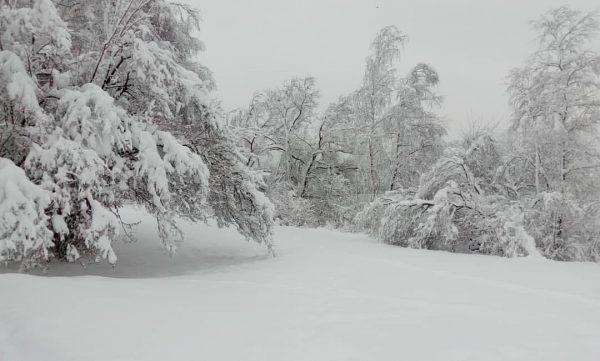 #winter #winterwonderland #photography #instaphoto #lifeisgood #nature #naturephotography #naturelovers #natur #snow #priroda #zima #austria ...