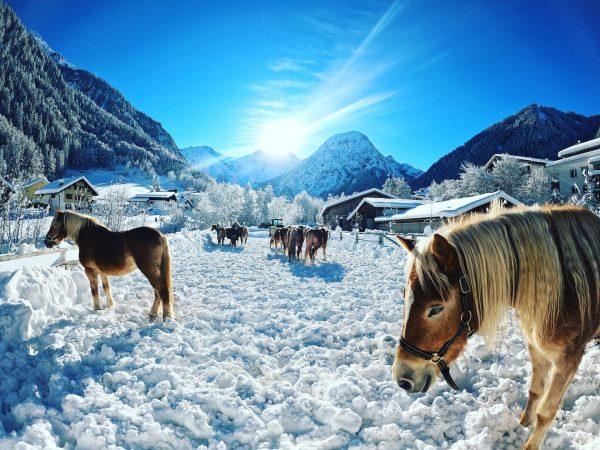 Heute in Brand ☃️☀️ #winterwonderland #brandnertal #vorarlberg #alps #austria #austrianalps #österreich #traumwetter #sonnenschein ...