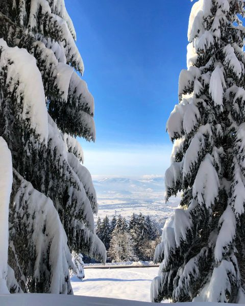 🌲🌲🌲 . . . #schnee #schneelandschaft #snow #snowday #snowlove #nature #naturephotography #natur #outdoor ...