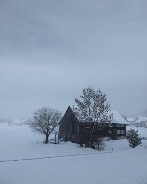 🐦Nebel-Schnee-Landschaften haben durchaus auch ihren Reiz....finde ich 💙 . #schneelandschaft #snowlandscape #nebelstimmung #nebelig ...