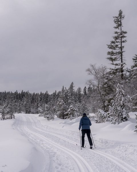 #Österreich #austria🇦🇹 #vorarlberg #bödele #snow #nature #winter #winterwonderland #winterwonderland❄️ #naturephotography #naturephoto #trees #bluesky ...