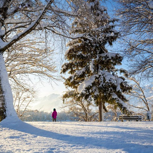 Winter am Baggersee❄️📷 . . . . #schnee #schneelandschaft #winterzauber #wintertime #snow #winter ...