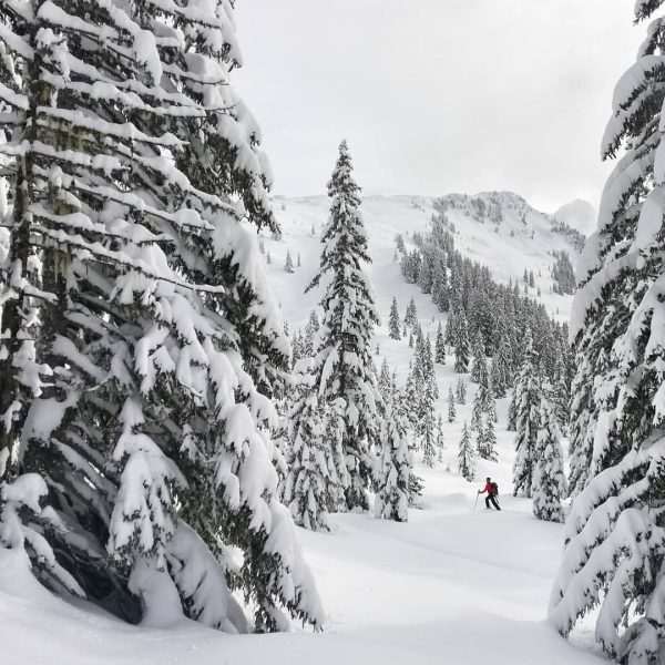 Der kleine Waldwichtel und die Winterbäume 🌠 #rauszeit #montafon #rauszeitmontafon #achtsamkeit #meinmontafon #achtsamwandern #meditation #offline #mindfulness #kristberg...