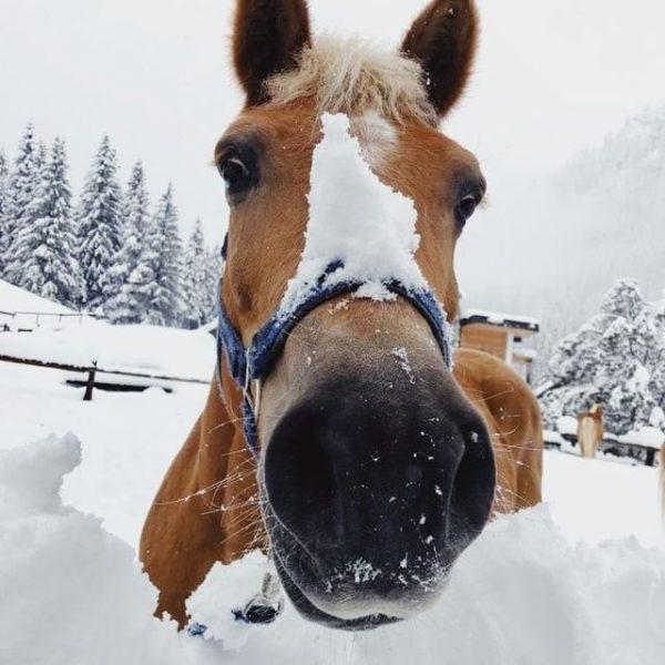 Oh Winter! Wunderbare, wolkenweiche Schneegrüße aus Gargellen 🥰☃️❄️ Und das mitten im goldenen ...
