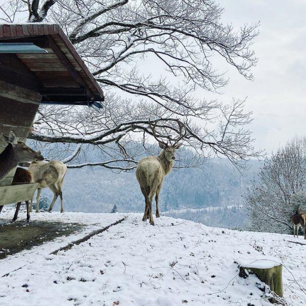 #austria #feldkirchwildpark Wildpark-Feldkirch