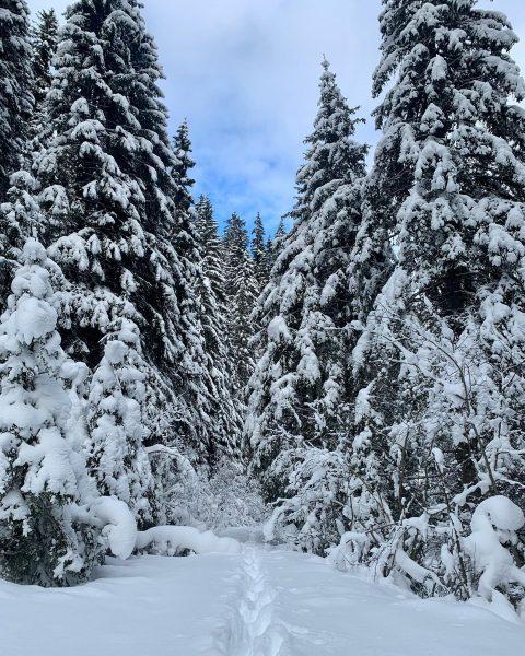 Dorthin, wo der tief verschneite Arlberg am unberührtesten ist, gelangt man am besten ...