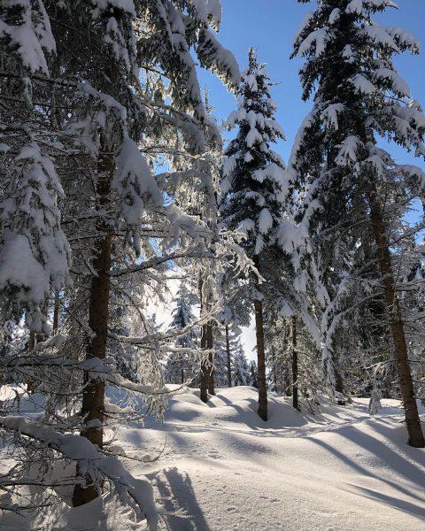 #bodenseevorarlberg #skitouring🎿 #bödele #bluesky #wanderlust #nature #winter #frozen #cold #ski #snow #fohramoos #meinvorarlberg ...