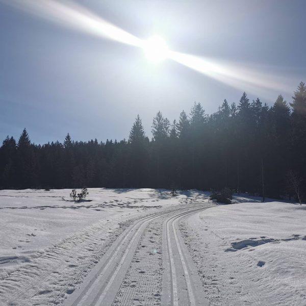 Langlaufen . . #vorarlberg #bödele #winter #schnee #loipe #langlaufen #sonne #traumtag #bewegung #gutfürdasimmunsystem ...
