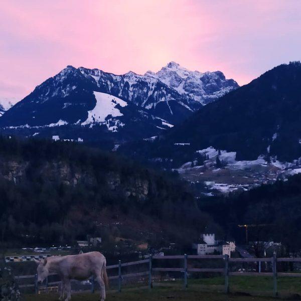 Beauty of Feldkirch🏞️ 💙 🏔️ #feldkirch #wildparkfeldkirch #wildpark #vorarlberg #vorarlbergwandern #ardetzenberg #schattenburg #nofilter ...