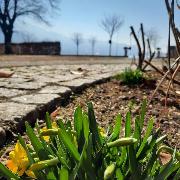 Frühlingserwachen 🌷 #seehotelamkaiserstrand #lochau #bregenz #rimchotelsandresorts #powerofblue #lionheart #sommer #bodensee #bodenseeliebe❤ #visitbregenz #venividivorarlberg ...
